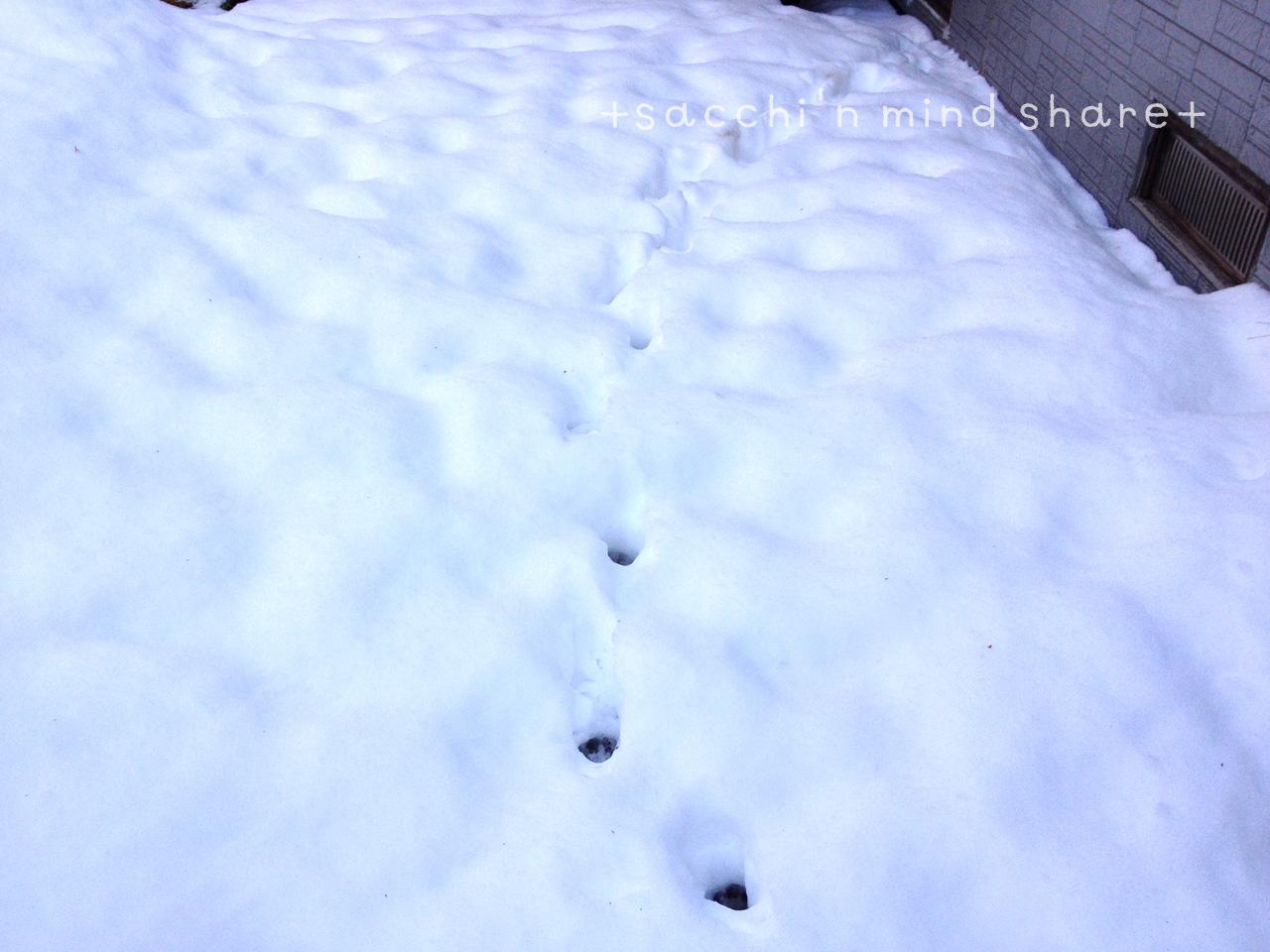 snowday140209-10