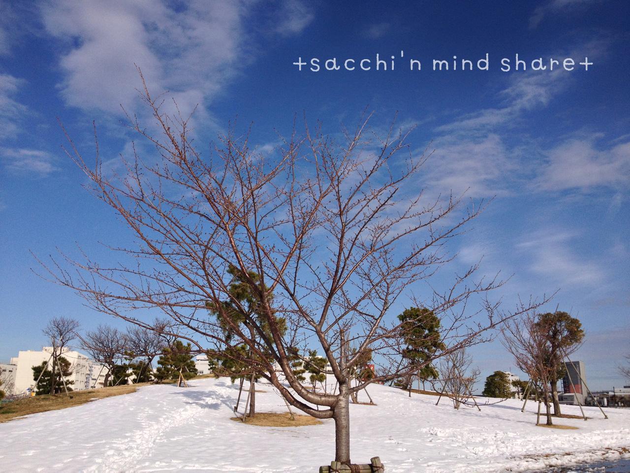 snowday140209-14