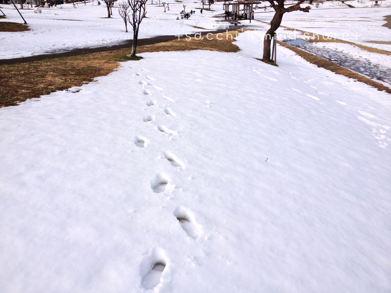 snowday140209-17