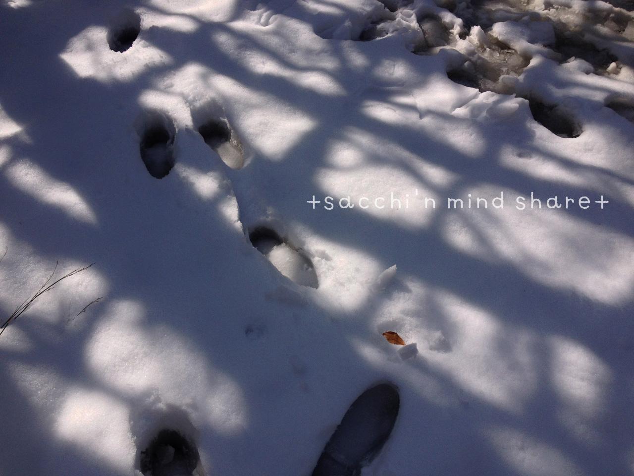 snowday140209-3