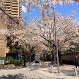 桜満開の「アークヒルズ」