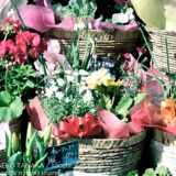 花屋の店先で販売されている切り花