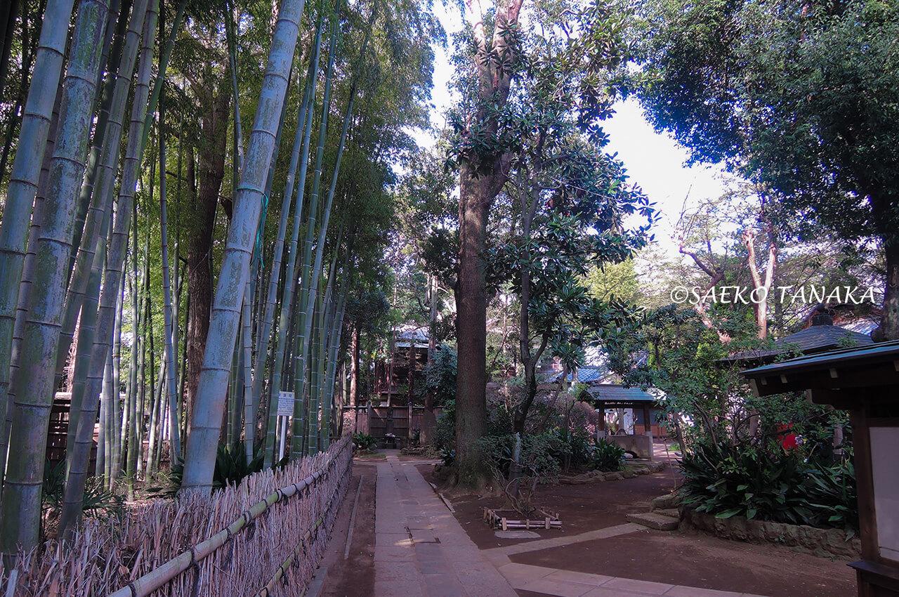 桜満開の「洗足池公園」の竹林