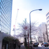 桜満開の「千鳥ヶ淵緑道」近辺の靖国通り