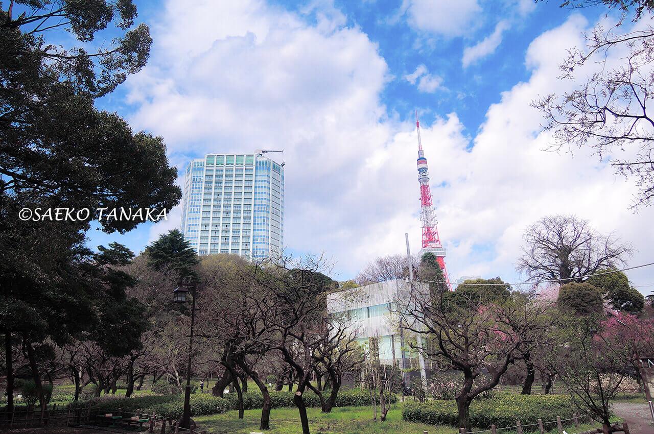 桜満開の「芝公園」と東京タワー