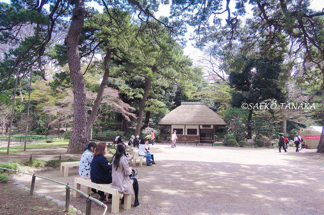 桜満開の「小石川後楽園」庭園内