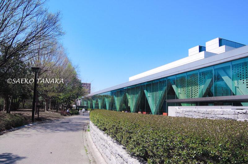 桜満開の「木場公園」の東京都現代美術館