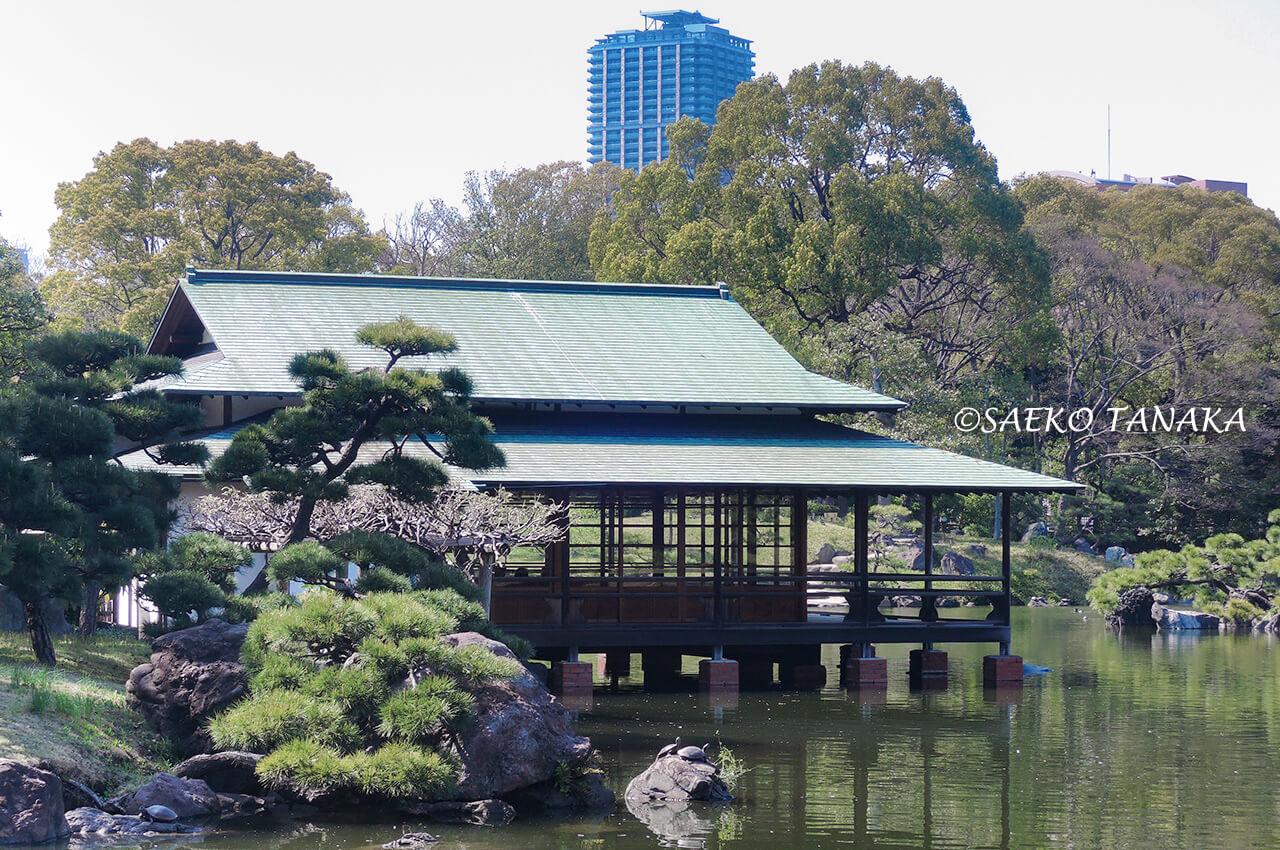 桜満開の「清澄庭園」庭園内