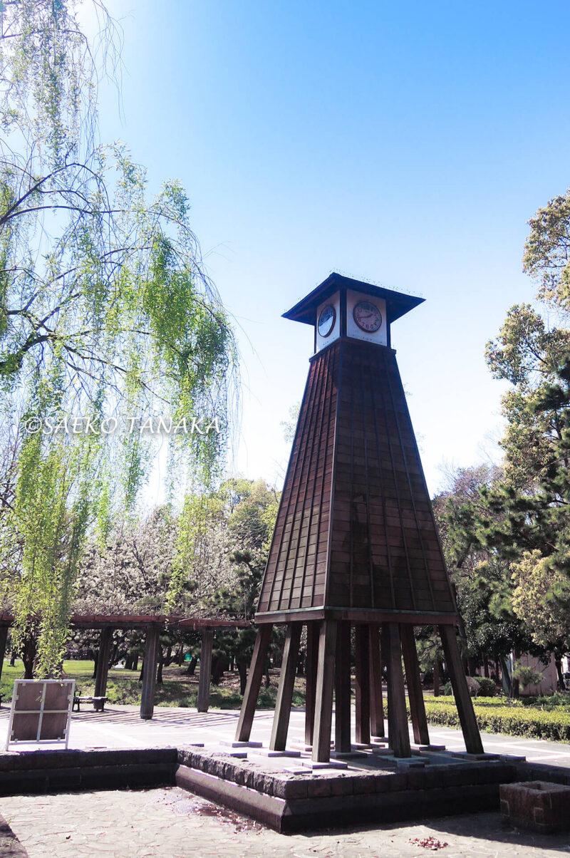 桜満開の「清澄公園」の江戸風時計塔