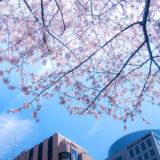 桜満開の代官山