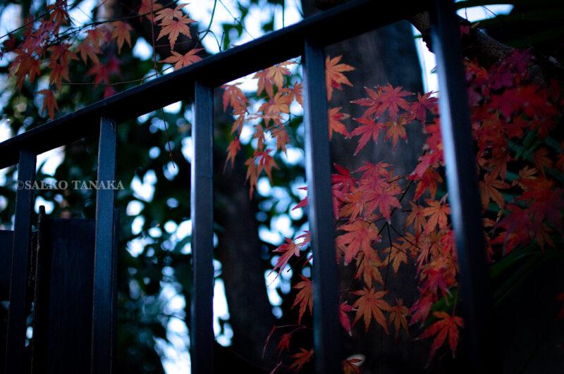 2020年1月1月元日の東京大田区大森・厳正寺