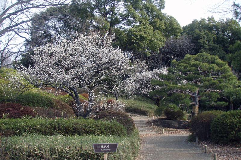 六義園の梅