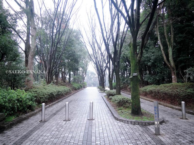 雨上がりの平和の森公園