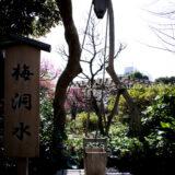 満開の紅梅白梅が楽しめる東京の梅名所のひとつ、向島百花園の梅洞水