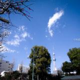 満開の紅梅白梅が楽しめる東京の梅名所、亀戸天神社と東京スカイツリー