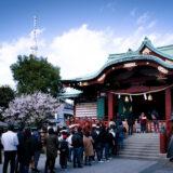 満開の紅梅白梅が楽しめる東京の梅名所、亀戸天神社の本殿と東京スカイツリー