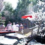 満開の紅梅白梅が楽しめる東京の梅名所、湯島天神/湯島天満宮で楽しめる梅まつり野点茶会