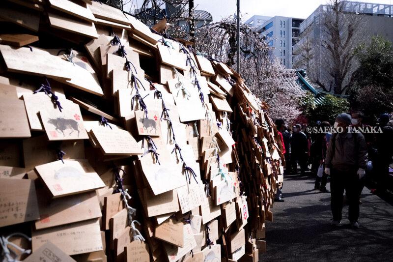 満開の紅梅白梅が楽しめる東京の梅名所、湯島天神/湯島天満宮の絵馬と梅