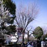 満開の紅梅白梅が楽しめる東京の梅名所、羽根木公園