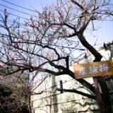 満開の紅梅白梅が楽しめる東京の梅名所、池上梅園にある、日本に4本のみ現存する超貴重品種の座論梅