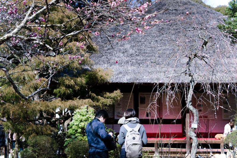 満開の紅梅白梅が楽しめる東京の梅名所、京王百草園にある三檪庵(さんれきあん)