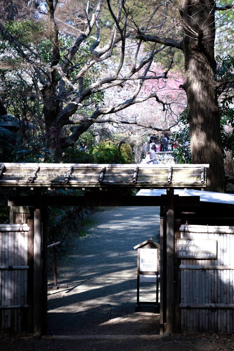 満開の紅梅白梅が楽しめる東京の梅名所、京王百草園に隣接する百草八幡神社(百草八幡宮)側から見た京王百草園