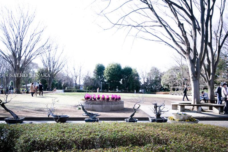 満開の紅梅白梅が楽しめる東京の梅名所、府中市郷土の森博物館の敷地内にある芝生広場