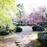 満開の紅梅白梅が楽しめる東京の梅名所、府中市郷土の森博物館の敷地内にある茶室・梅欅庵前の庭