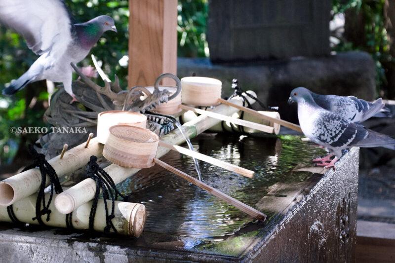満開の紅梅白梅が楽しめる東京の梅名所、谷保天満宮にある手水舎