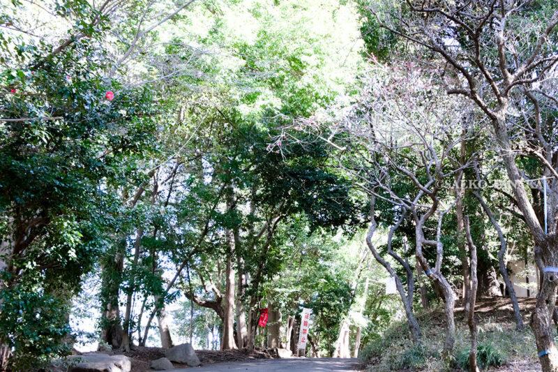 満開の紅梅白梅が楽しめる東京の梅名所、谷保天満宮にある社叢(鎮守の森)