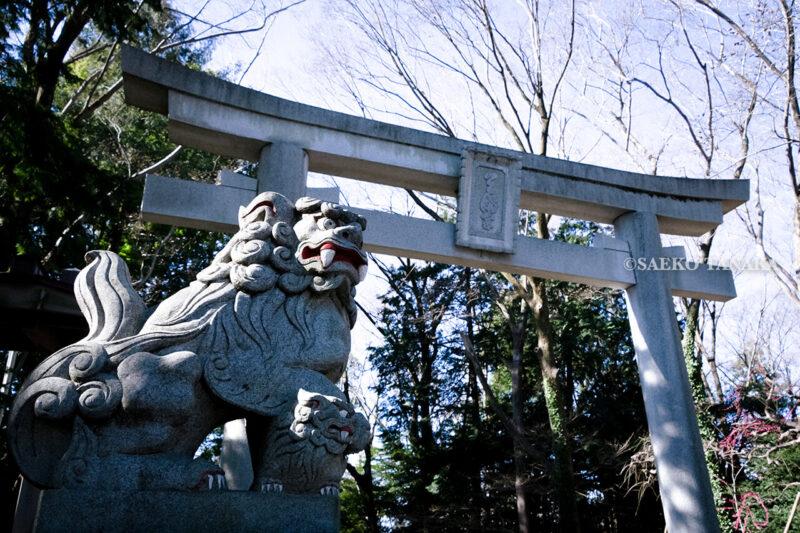 満開の紅梅白梅が楽しめる東京の梅名所、谷保天満宮にある狛犬と鳥居