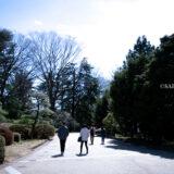 満開の紅梅白梅が楽しめる東京の梅名所、神代植物公園の正門入ってつつじ園・しゃくなげ園横の散策路