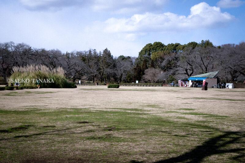 満開の紅梅白梅が楽しめる東京の梅名所、神代植物公園にある芝生広場