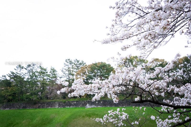満開のソメイヨシノ・ヤマザクラなどが楽しめる東京の桜名所、千鳥ヶ淵公園