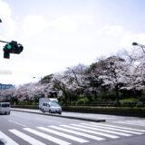 満開のソメイヨシノ・ヤマザクラなどが楽しめる東京の桜名所、千鳥ヶ淵公園に隣接する駐日英国大使館と桜並木