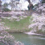 満開のソメイヨシノなどが楽しめる東京の桜名所、千鳥ヶ淵緑道