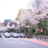 満開のソメイヨシノなどが楽しめる東京の桜名所、靖国神社/靖國神社前の靖国通りの桜並木