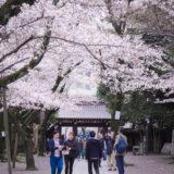 満開のソメイヨシノなどが楽しめる東京の桜名所、靖国神社/靖國神社の南門前の桜