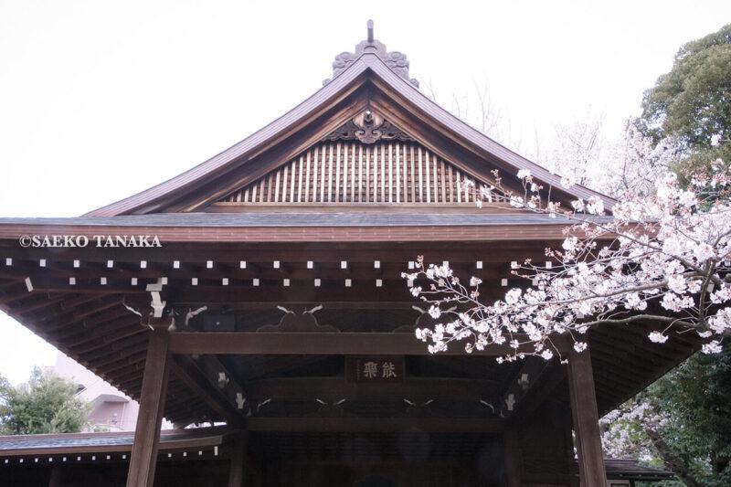 満開のソメイヨシノなどが楽しめる東京の桜名所、靖国神社/靖國神社の能楽堂