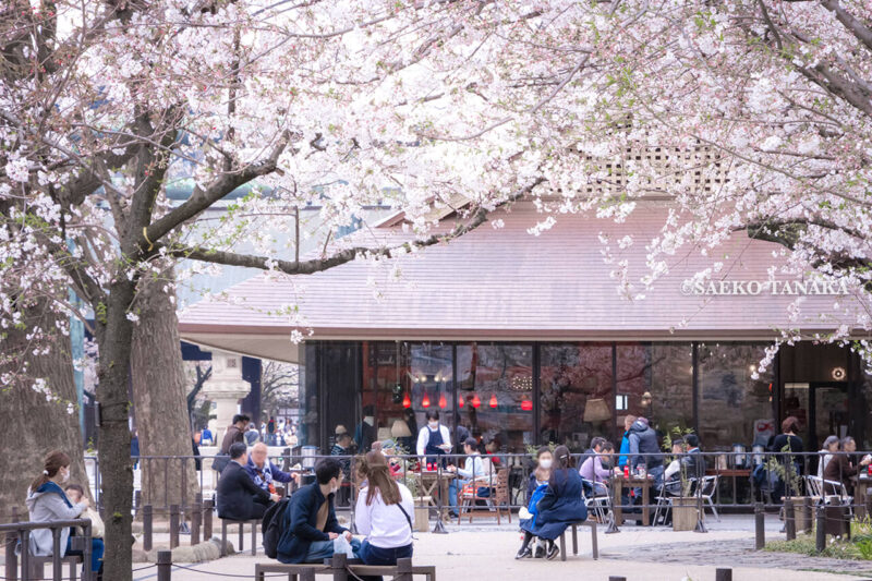 満開のソメイヨシノなどが楽しめる東京の桜名所、靖国神社/靖國神社のcafe&dining「アティックルーム靖國外苑」