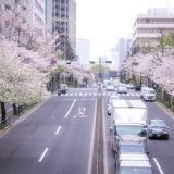 満開のソメイヨシノなどが楽しめる東京の桜名所、靖国神社/靖國神社に向かう内堀通りの桜並木