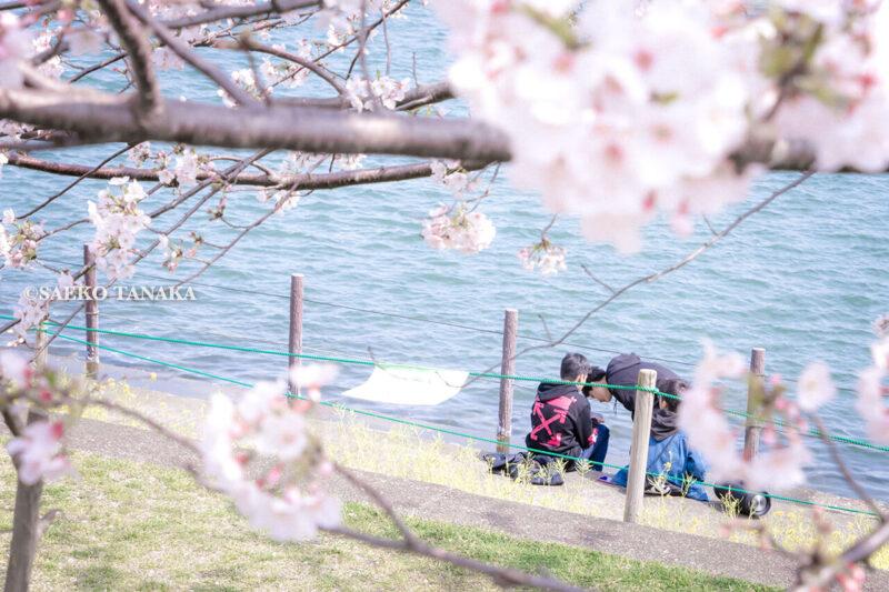 満開のソメイヨシノなどが楽しめる東京の桜名所、大森ふるさとの浜辺公園にある、ふるさとの広場と浜辺橋を結ぶ桜並木と菜の花と、海辺で遊ぶ大人の男性と男の子たち