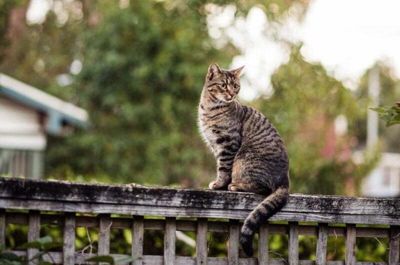 読みたくないブログとしてPV減少の原因とも酷評される会話形式の吹き出しの導入を嫌っていたからこそ、ブログに会話形式の吹き出しを効果的に導入するためにキャラクターとなる猫が庭先で周囲をキョロキョロ見渡している様子を撮影