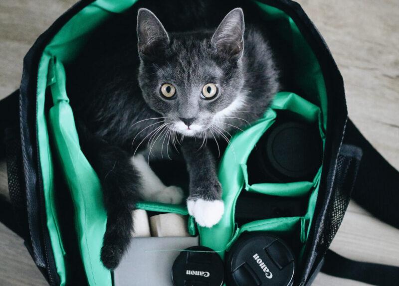 読みたくないブログとしてPV減少の原因とも酷評される会話形式の吹き出しの導入を嫌っていたからこそ、ブログに会話形式の吹き出しを効果的に導入するためにキャラクターとなる猫がカメラバッグで顔をのぞかせている様子を観察