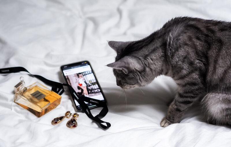 読みたくないブログとしてPV減少の原因とも酷評される会話形式の吹き出しの導入を嫌っていたからこそ、ブログに会話形式の吹き出しを効果的に導入するためにキャラクターとなる猫がiPhoneの写真をのぞかせている様子を眺める