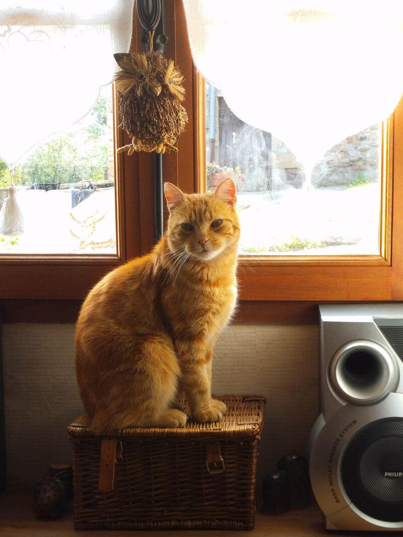 読みたくないブログとしてPV減少の原因とも酷評される会話形式の吹き出しの導入を嫌っていたからこそ、ブログに会話形式の吹き出しを効果的に導入するためにキャラクターとなる猫が窓辺で佇んでいる様子を撮影