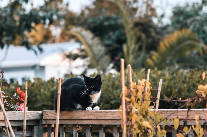 読みたくないブログとしてPV減少の原因とも酷評される会話形式の吹き出しの導入を嫌っていたからこそ、ブログに会話形式の吹き出しを効果的に導入するためにキャラクターとなる猫が庭の柵の上で周囲を見渡している様子を見る