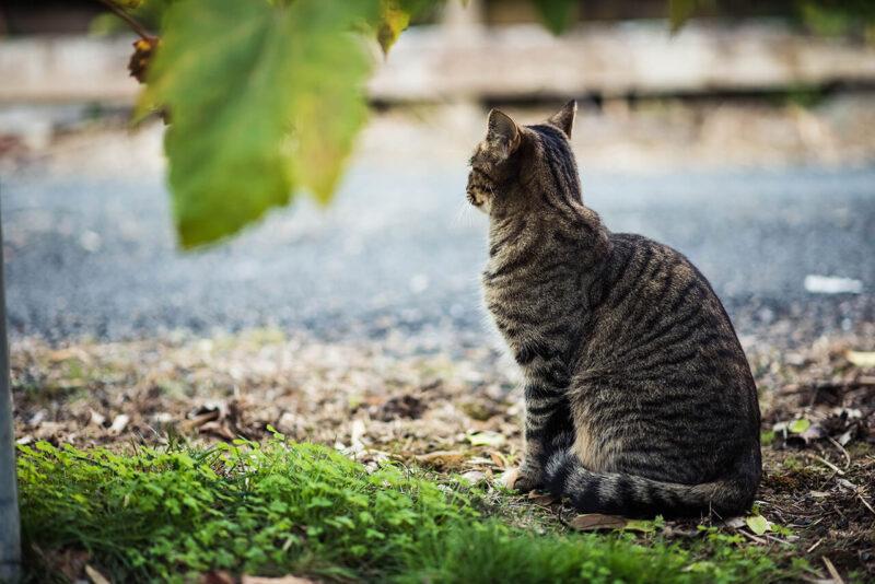 読みたくないブログとしてPV減少の原因とも酷評される会話形式の吹き出しの導入を嫌っていたからこそ、ブログに会話形式の吹き出しを効果的に導入するためにキャラクターとなる猫が川辺で川を眺めながら微動だにしない姿を撮影
