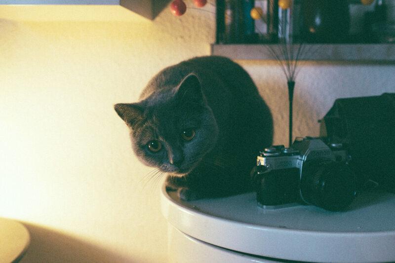 読みたくないブログとしてPV減少の原因とも酷評される会話形式の吹き出しの導入を嫌っていたからこそ、ブログに会話形式の吹き出しを効果的に導入するためにキャラクターとなる猫がカメラとともにこちらをうかがう様子を撮影